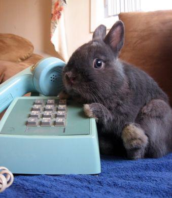 Http www tehcute com pics 201111 bunny on the phone big