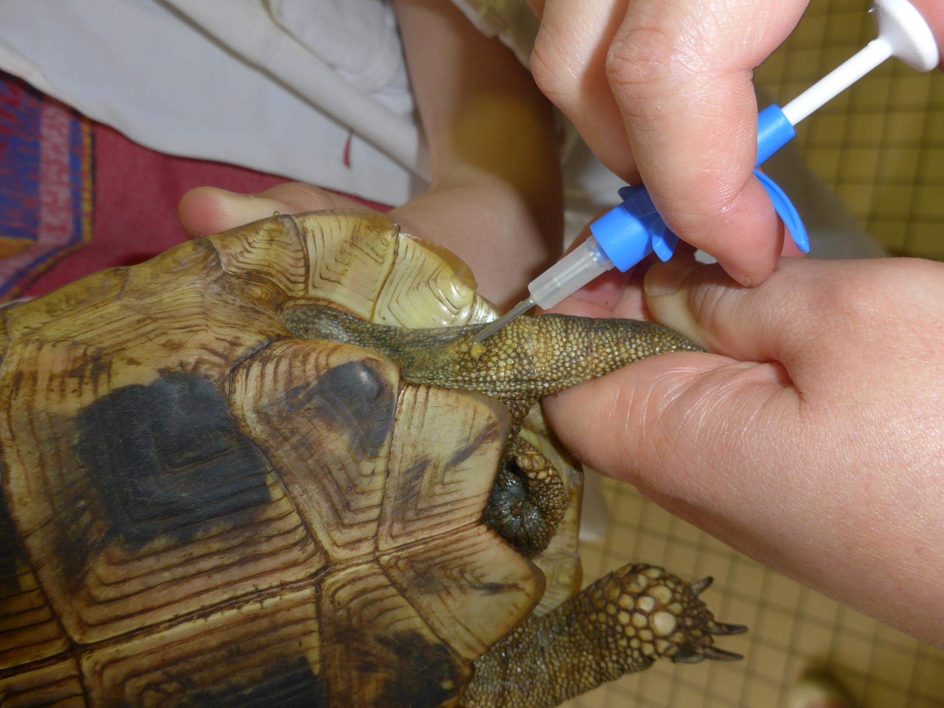 Identification tortue