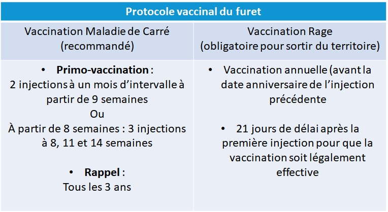 Protocole vaccinal furet NAC Atlan Vet